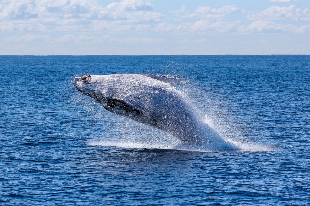 Whale-Watching Gold Coast in 2021